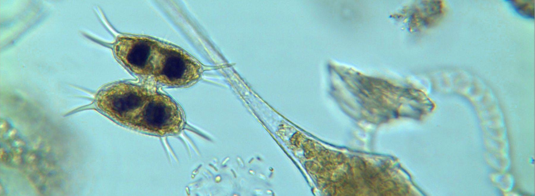 Planktonia