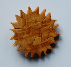 Pseudopediastrum boryanum - rintakoru.